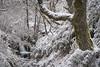 Spring chronicles (Qasar Rasaq) Tags: wood spring landscape bosque cascada stream elbierzo árbol snow arroyo trees waterfall paisaje león tree bierzo forest creeck primavera españa quintanadefuseros spain árboles nieve castillayleón