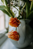 Vase...... (christilou1) Tags: sony rx1 35mm zeiss tribe summit flowers dead dying jug vase home