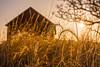 Morning at Old Farm (Daniel000000) Tags: wisconsin morning sunrise hay grass barn farm light yellow golden hour sun sunshine old sunlight tree nature landscape nikon photography d750 dslr