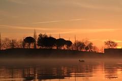 Navegando entre la bruma... (cienfuegos84) Tags: agua dorado gold water pato duck sky cielo siluetas