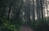 Autumn Fog (Netsrak) Tags: eu europa europe forst nebel wald fog forest mist woods eifel rheinbach nordrheinwestfalen deutschland de