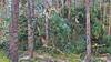 20180331_172539_e (wos---art) Tags: bildschichten schneebruch sturmbruch äste bäume aufräumen haufen