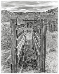 Cattle Chute (magnetic_red) Tags: wooden wood cattle corral chute fence post old mountains desert blackandwhite mojavenationalpreserve