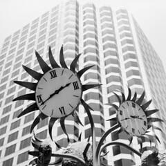 Dallas, Texas (RickC.) Tags: texas dallas 120 6x6 urban agfa isolette folder rollfilm bw acros rodinal fuji flower