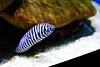 Langkawi - Underwater World (deepgoswami) Tags: malaysia langkawi underwaterworld aquarium