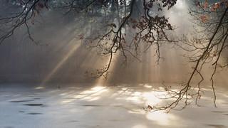 Frühlingssonne trifft auf Morgennebel...