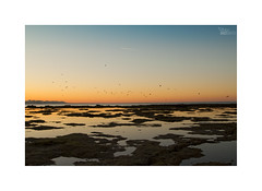 ... (ángel mateo) Tags: ángelmartínmateo ángelmateo cádiz andalucía españa playa lacaleta andalusia spain amanecer dawn sunrise mareabaja bajamar azul cielo naranja luz mar lowtide tide blue sky orange light sea gradient