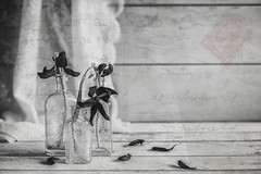 21/100: From me to you with love... (judi may) Tags: 100xthe2018edition 100x2018 image21100 sliderssunday mono monochrome tulips blackandwhite petals lace textures postcard wood vintagebottles vintage texture dyingtulips dyingflowers flowers canon5d threesacharm threebottles bottles glass script stamp writing bokeh depthoffield dof