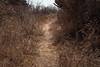 Querétaro -3398180303 (Jacobo Zanella) Tags: queretaro mexico 2018 sendero camino senda path line hidden mysterious rural land rough jacobozanella jz76