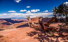 Shafer Trail (ProPeak Photography - Thanks for 600,000 views!) Tags: america blue blueskies canyon canyonlandsnationalpark clouds famousplace grandviewoverlook green internationallandmark islandinthesky juniper lasalmountains landmark landscape mesa moab mountains nps nationalpark nature northamerica orange places red rocks shafercanyon shaferroad summer touristattraction travel traveldestination travelandtourism trees usa unitedstates utah ngc