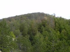 DSCN9729 (Gianluigi Roda / Photographer) Tags: apennines summer latesummer mountains woods trees rocks landscapes crocedeicolli appenninobolognese