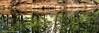 Merced River Reflections, The River Bank (OJeffrey Photography) Tags: mercedriver river reflections trees yosemitevalley panorama pano nikon d850 ojeffrey ojeffreyphotography jeffowens