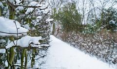 Bye Bye Winter (Robert Benatzky Picture) Tags: wandsbekergehölz hamburg schnee snow winter park winterwonderland robertbenatzkypicture beautiful