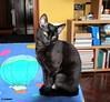 1.255 - Am I alright like that? (esnalar) Tags: gato felino mascota compañero amigo cat feline mascot companion friend chat féin mascotte compagnon ami