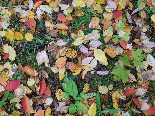 Листья в парке ©  ayampolsky