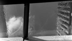 触覚 (sense of touch) (Dinasty_Oomae) Tags: ricohflexnewdia ricohflex リコーフレックス リコーフレックスニューダイヤ 白黒写真 白黒 monochrome blackandwhite blackwhite bw outdoor 東京都 東京 tokyo 港区 minatoku 六本木 roppongi sky cloud 空 雲 水 water ripple 水紋