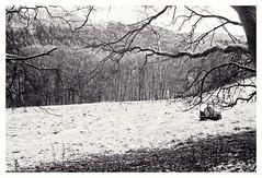 Silence (czuerbig) Tags: 24â°c 35mm 8min adotechiii adox cms20ii eifel film hohesvenn iso20 leica m6 summaron3528 analog landscape