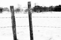 Boundary (John (Thank you for >2 million views)) Tags: 7dwf monochrome bw blancoynegro barbedwire fieldposts textures snow winterscene trees dof barrowcourt barrowgurney somerset