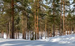 Ähtäri Zoo, Finland (Ninara) Tags: ähtäri ähtärizoo winter wildanimal animal zoo talvi