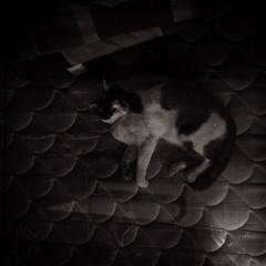 Dizzy (La Mala Testa) Tags: concepciónchile dizzy cat animal 120mm 6x6 lubitel166b lomo lomography