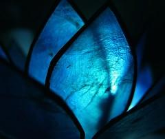#Theblues #Macromondays #Glasslotus (carloancona) Tags: theblues macromondays lotus