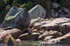 (Mi-chi Huang) Tags: abeltasmannationalpark newzealand newzealandsouthisland newzealandlandscape adventure beautiful beauty holiday natural nature nz outdoor rock sea seakayaking seal summer tree water