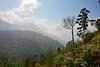 India - Kerala - Munnar - Top Station - 57 (asienman) Tags: india kerala munnar topstation asienmanphotography