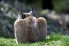 Luchs (Michael Döring) Tags: gelsenkirchen bismarck zoomerlebniswelt zoo luchs lynx tc14eii afs600mm40e d850 michaeldöring