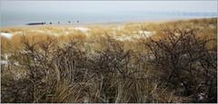 Dunes, plage et L'Oosterscheldekering (Barrage de l'Escaut oriental), Noord-Beveland, Kamperland, Nederland (claude lina) Tags: claudelina nederland hollande paysbas zeelande zeeland merdunord noordzee plage dune beach debanjaard kamperland noordbeveland plandelta oosterscheldekering barrage barragedelescautoriental oyat