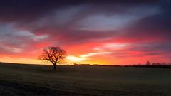Sunrise Surprise (Glenn D Reay) Tags: tree oak sunrise dawn colourful solitary cold pentaxart pentax k30 sigma1770hsm glennreay