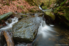Little creek. (gillesfrancotte) Tags: 2018 amblève ardennes autumn aywaille d800 hornay january janvier nikon ninglinspo outdoor sedoz automne cascade creek eau fall forest landscape longexposure nature ruisseau stream torrent undergrowth underwood water waterfall waterscape wood theux wallonie belgique be