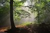 Into the light (Hector Prada) Tags: bosque forest niebla fog luz light hojas leaves árbol tree contraluz backlight sombras shadows verano summer naturaleza nature paísvasco basquecountry