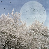 the moon was sewn into the sky (1crzqbn) Tags: sliderssunday flowers spring moon birds