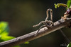 Assise....! - Seated....! (minelflojor) Tags: branche sèche mousse arbre bois flou bokeh macro dry branch foam tree wood blur feuille bourgeon tordu twisted bud leaf tamronsp90mmf28dimacro11vcusd