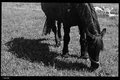 WP_20180407_15_02_07 (anto-logic) Tags: cavalli horses cavallo horse ombre luce luminoso chiaro bello erba grass cani dogs labrador amici friends free freedom sun shadows ence light clear daily nice caldo warm beautiful lovely pretty bn bw blackandwhite biancoenero love outdoor streetshots inquadratura wonderful fabulous magnificent superb naturallight skin lighting framing crop charming puntodivista profonditàdicampo pov dof bokeh focus pointofview depthoffield postproduzione postproduction lightroom filtro filter effetti effects photoshop alienskin microsoft lumia950