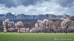 Sierra de La Cabrera (Edu.San.) Tags: naturaleza airelibre primavera arboles almendros sierra lacabrera torrelaguna madrid españa nubes