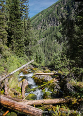 Forest in Altai mountains (Tatters ✾) Tags: russia altai creek conifer forest logs lightroom stitch
