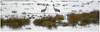 Cranes. (vegetus aer) Tags: woodwaltonfen greatfen greatfenproject wildlifetrust bcnwildlifetrust nnr cambridgeshire crane