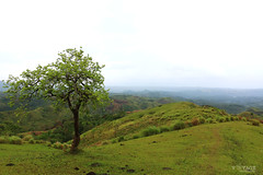 Solitary Tree on a Hill (Voyage Photography) Tags: green tree outdoor mountain sky morning hill greenhill nature beautifulnature beautiful view outside landscape grass hilly canoneos70d bohol solitary lonely travel traveler lone greenery grassyhill early earlymorning