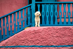 Oh my dog ! (poupette1957) Tags: art atmosphère architecture animals canon city curious colors detail dog graphisme guatemala humanisme humour house imagesingulières life landscape photographie rue street town travel urban ville voyage