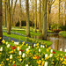 Keukenhof Garden, Amsterdam