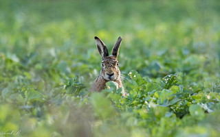Hare's Paradise!