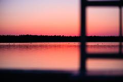 Sunset Swim (Ir3nicus) Tags: 105mm28vr ausen demaasduinen ente fähre see sonnenuntergang wasser bergen limburg niederlande nl afsvrmicronikkor105mm128gifed nikon d700 dslr fullframe fx outdoor duck ferry lake sunset water netherlands