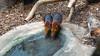 synchroon drinken (marieckejanssen) Tags: black rufous elephant shrew steppeslurfhondje mammal rhynchocyon petersi zoo dierentuin diergaarde blijdorp dier blindphotographer