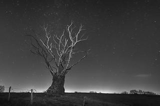 L'arbre et les etoiles