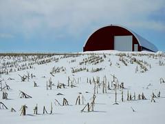 A big red barn of the Miller's farms in Vars (Ottawa), Ontario (Ullysses) Tags: millersfarm vars ottawa ontario canada ferme winter hiver barn grange cornfield