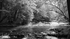 *** (pszcz9) Tags: polska poland przyroda nature natura rzeka river tanew roztocze rezerwat las bw black white monochrome czarnobiałe sony a77