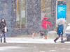 A Flakey World (Mildred Alpern) Tags: outdoors street snow snowflakes umbrella people poster windows dogs