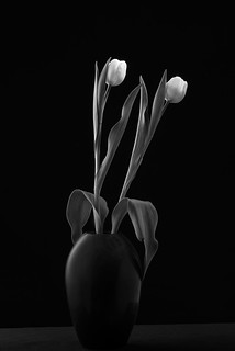 Black Vase With Two Tulips