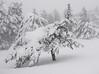 Slivnica (happy.apple) Tags: cerknica slovenia si slovenija slivnica notranjska winter snow sneg snowstorm pine bor tree drevo